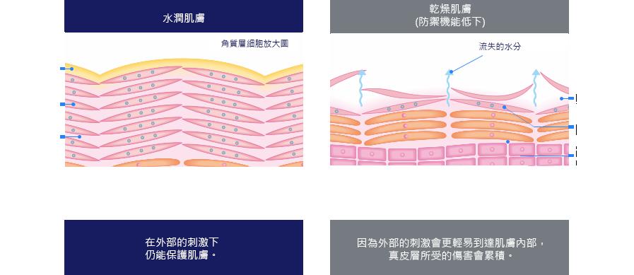 水潤肌膚角質層細胞放大圖